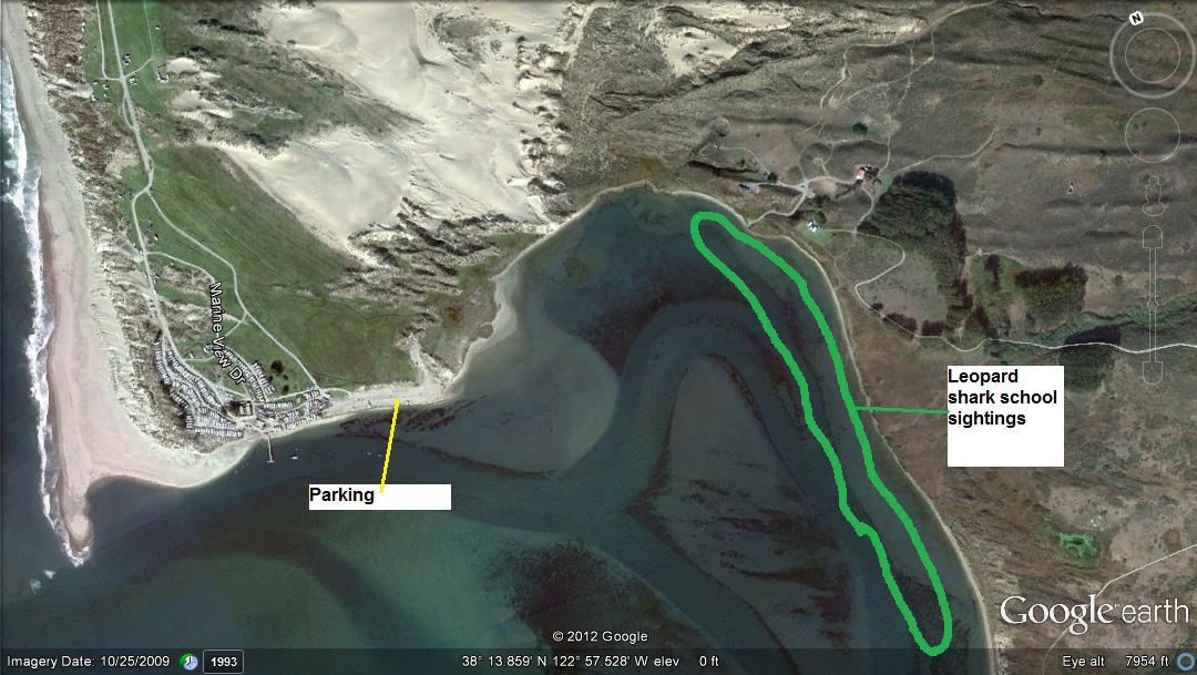 Lawson 39 s landing fishing report april 2012 for Tomales bay fishing report