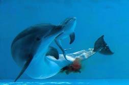 Nascimento de um golfinho
