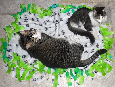 Anakin the two legged cat & Trixie share a blanket