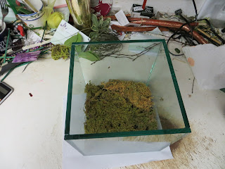 Second Layer of Sheet Moss