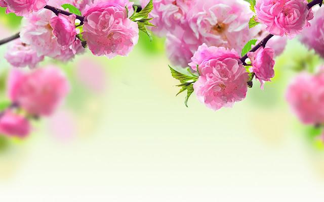Lente achtergrond met roze bloemen