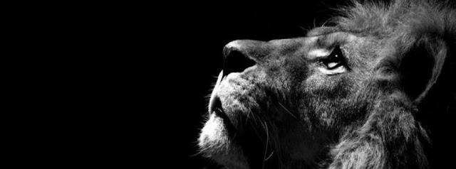 Aslan Kapak Fotoğrafları