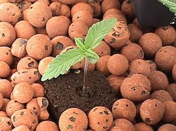 GROW YOUR MEDICINE Soils and Grow Mediums