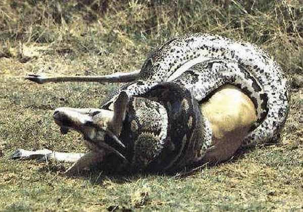 Dangerous snakes: 27 P...