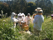 Intro To Natural Beekeeping