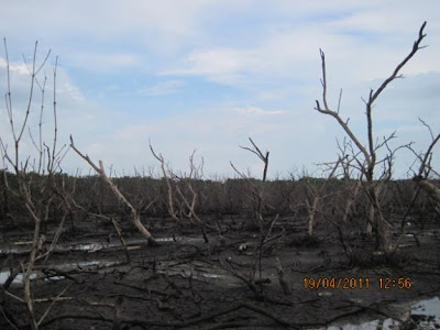 Scary mangroves