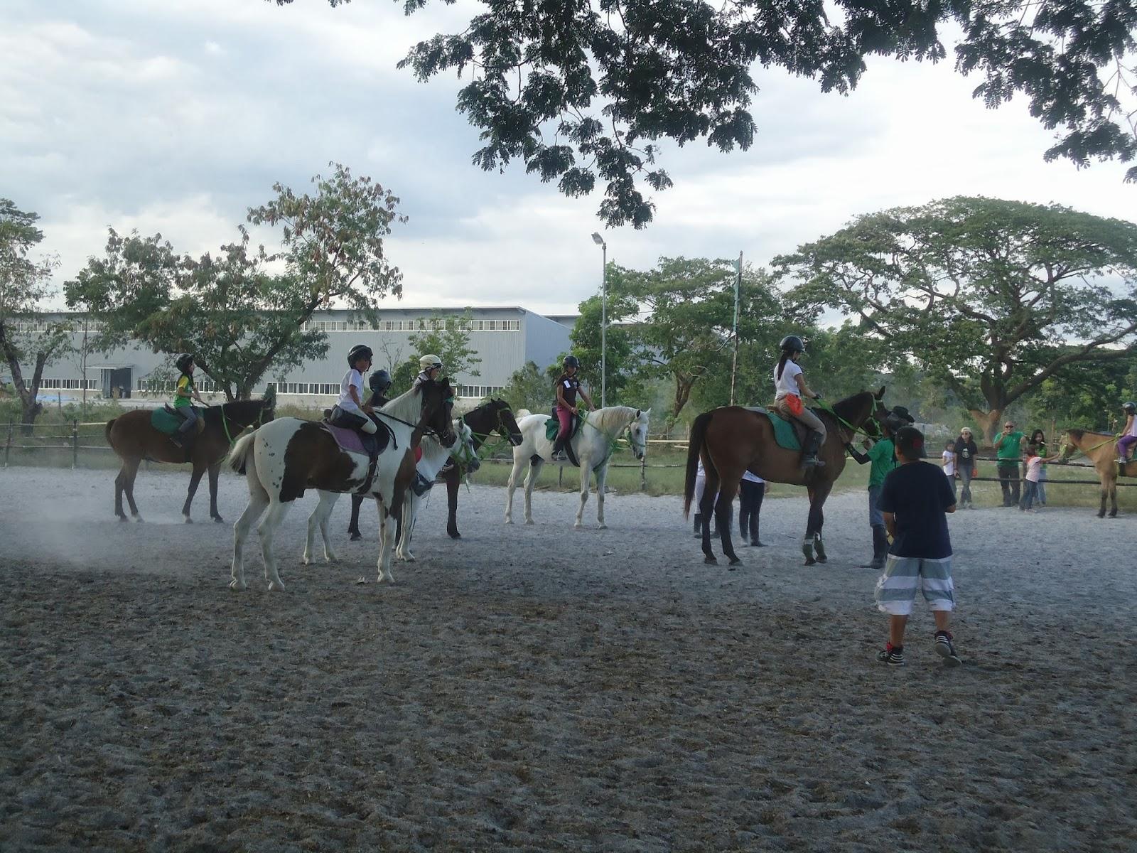 Horse Summer Camp Craft Ideas
