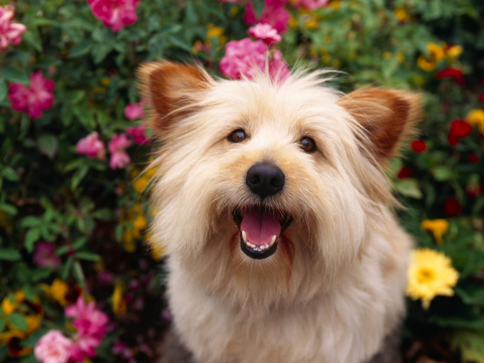 Wallpaperfreeks hd cute dog wallpapers 1600x1200 for Pictures of cute dogs