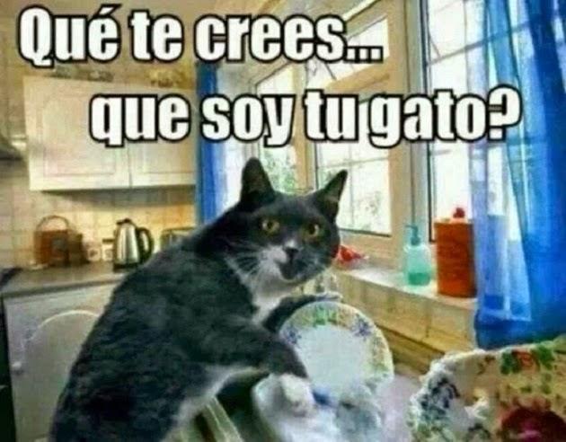 ¿Crees que soy tu gato?