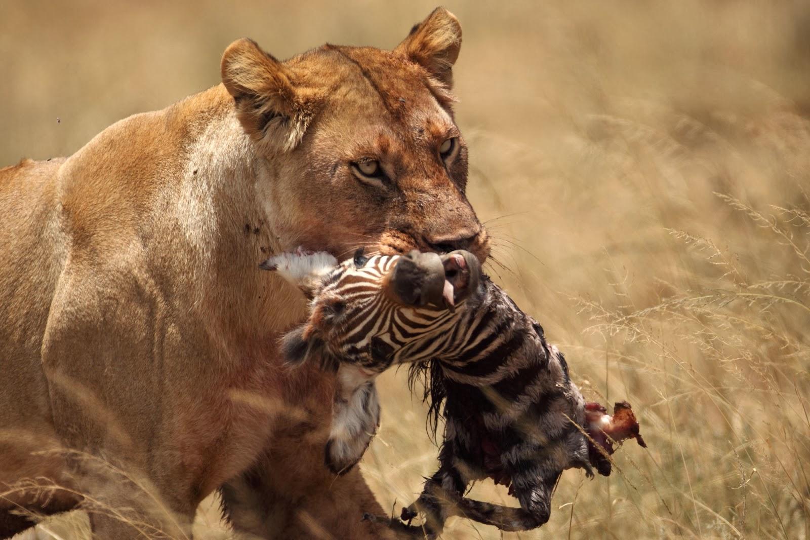 Rüyada Jaguar Görmek ve Öldürmek Ne demek