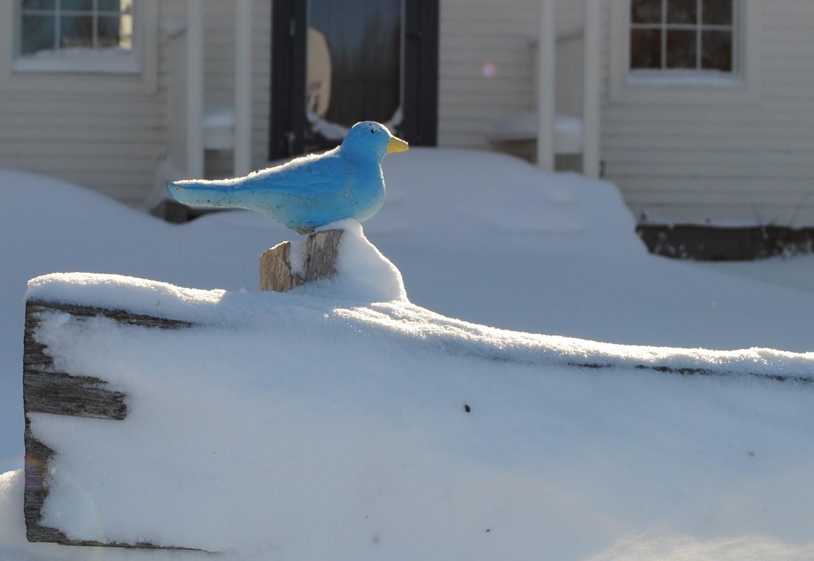 robert frost bird