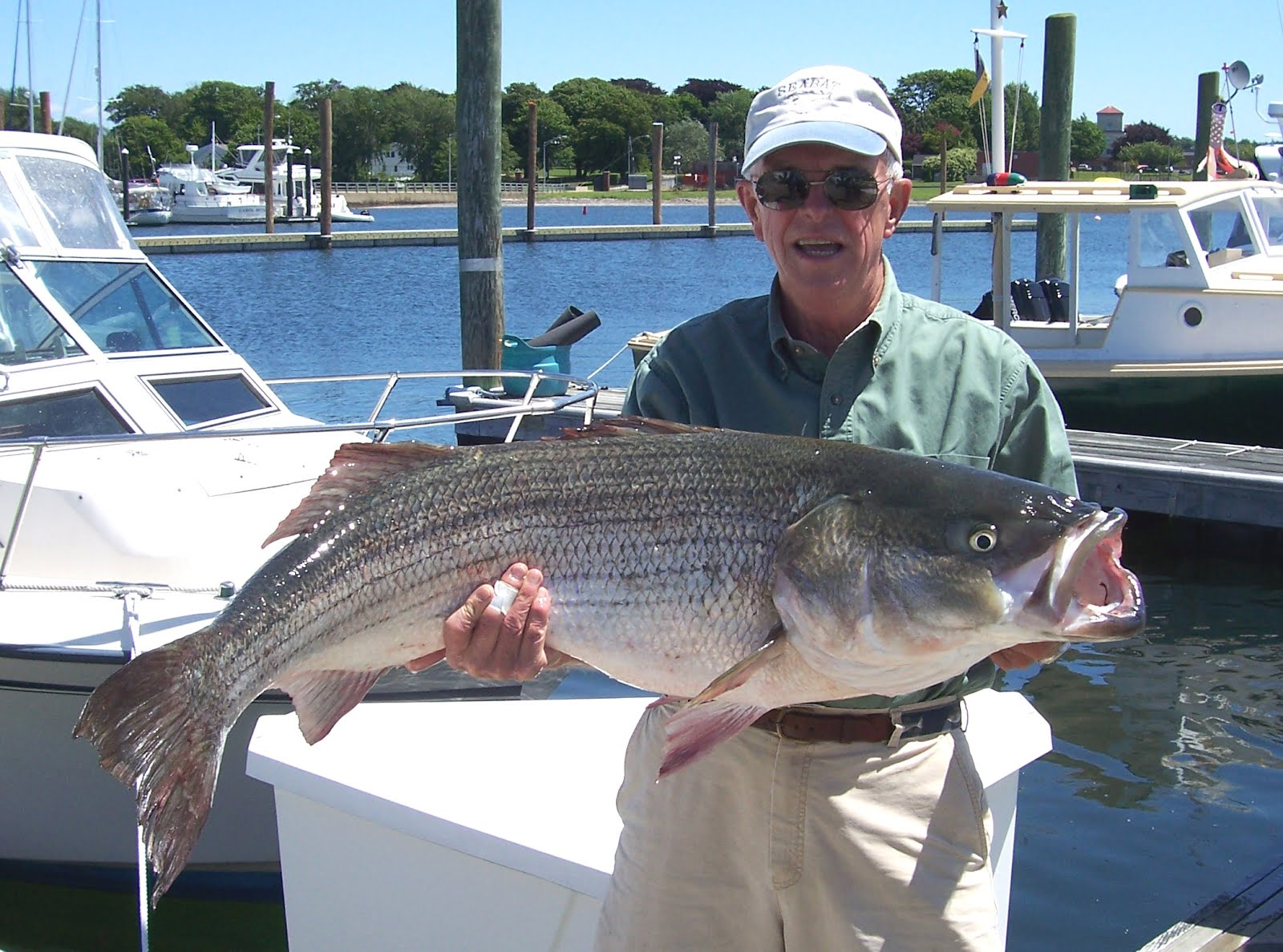 Humps and bumps off newport yield big bass college for Rhode island saltwater fishing regulations