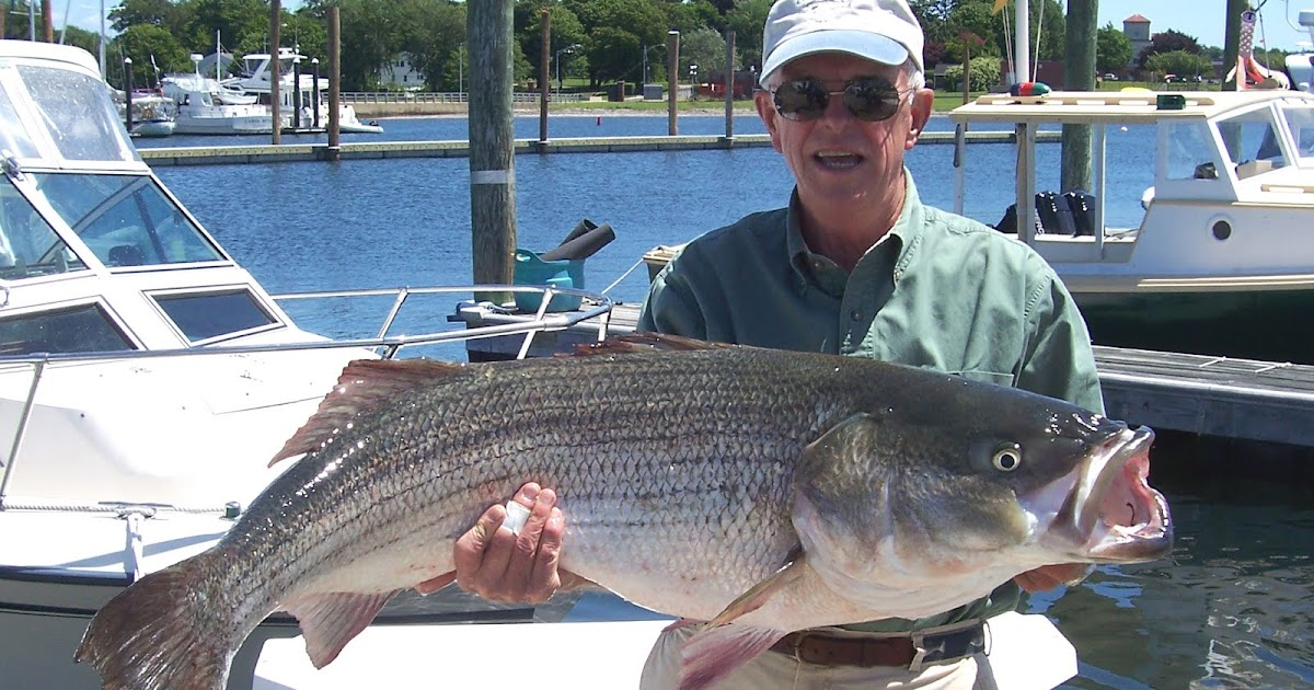 no fluke fishing: Humps and bumps off Newport yield big bass