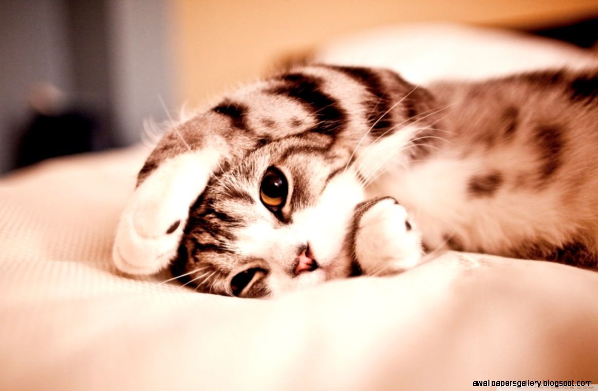 Funny Cat Wallpaper Widescreen | Wallpapers Gallery