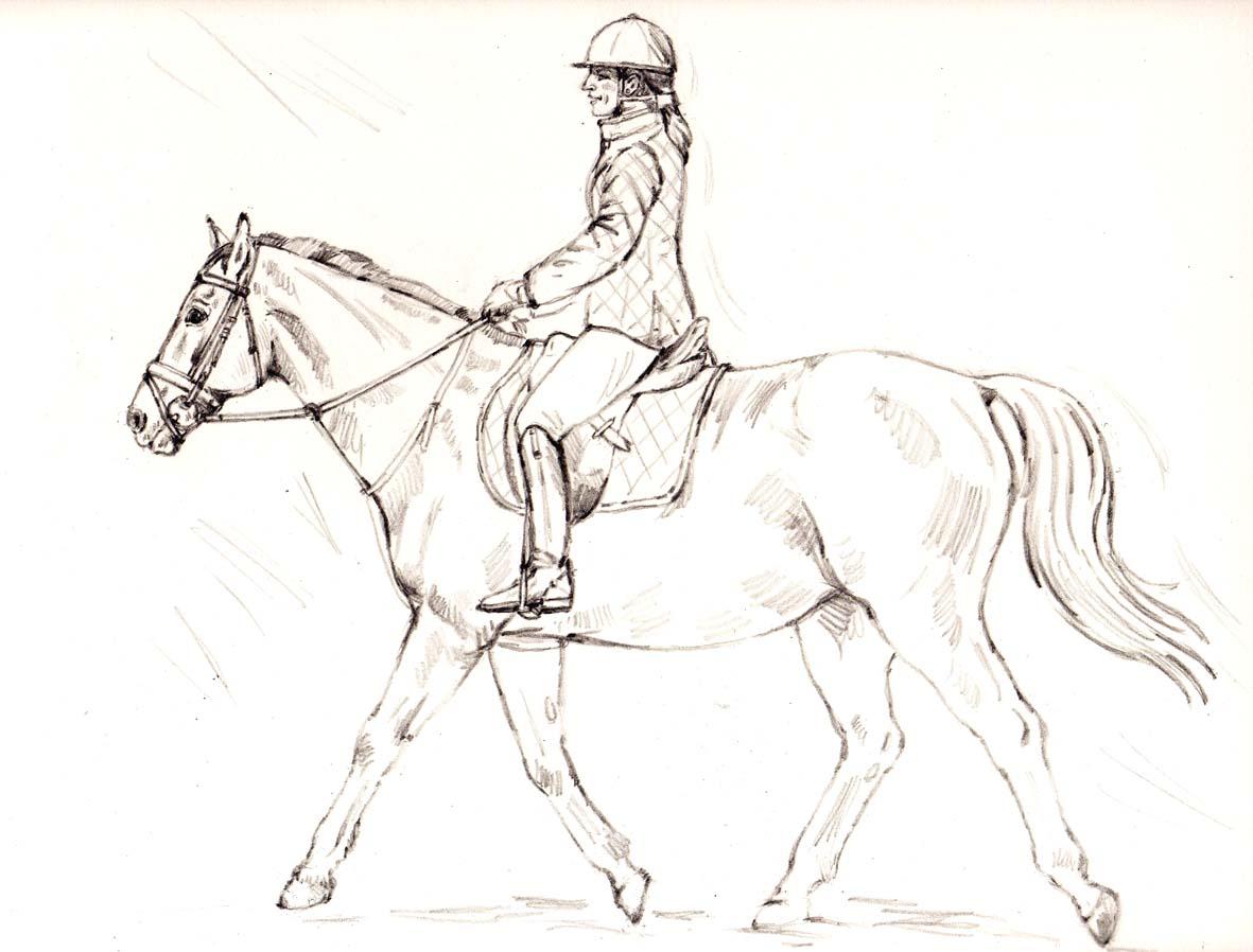 C line chollet aquarelles portrait d 39 une cavali re cheval - Dessin cavaliere ...