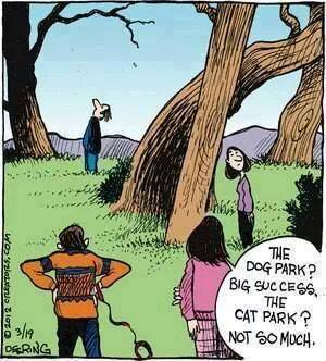 Why Cat Parks Never Work Out