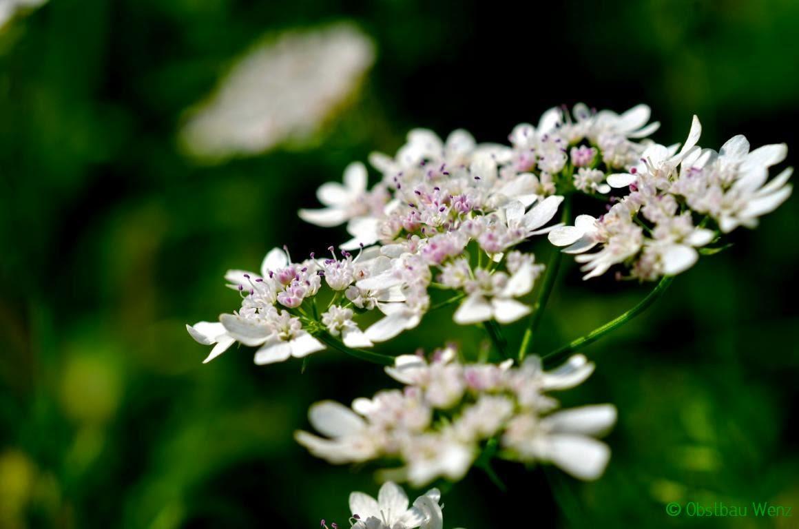 Blüte, Blume