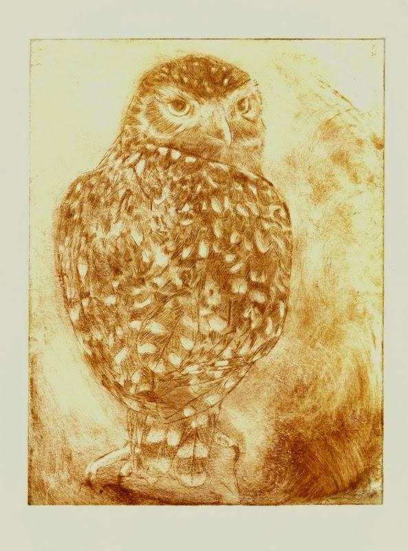 Little owl Athene noctua drypoint print