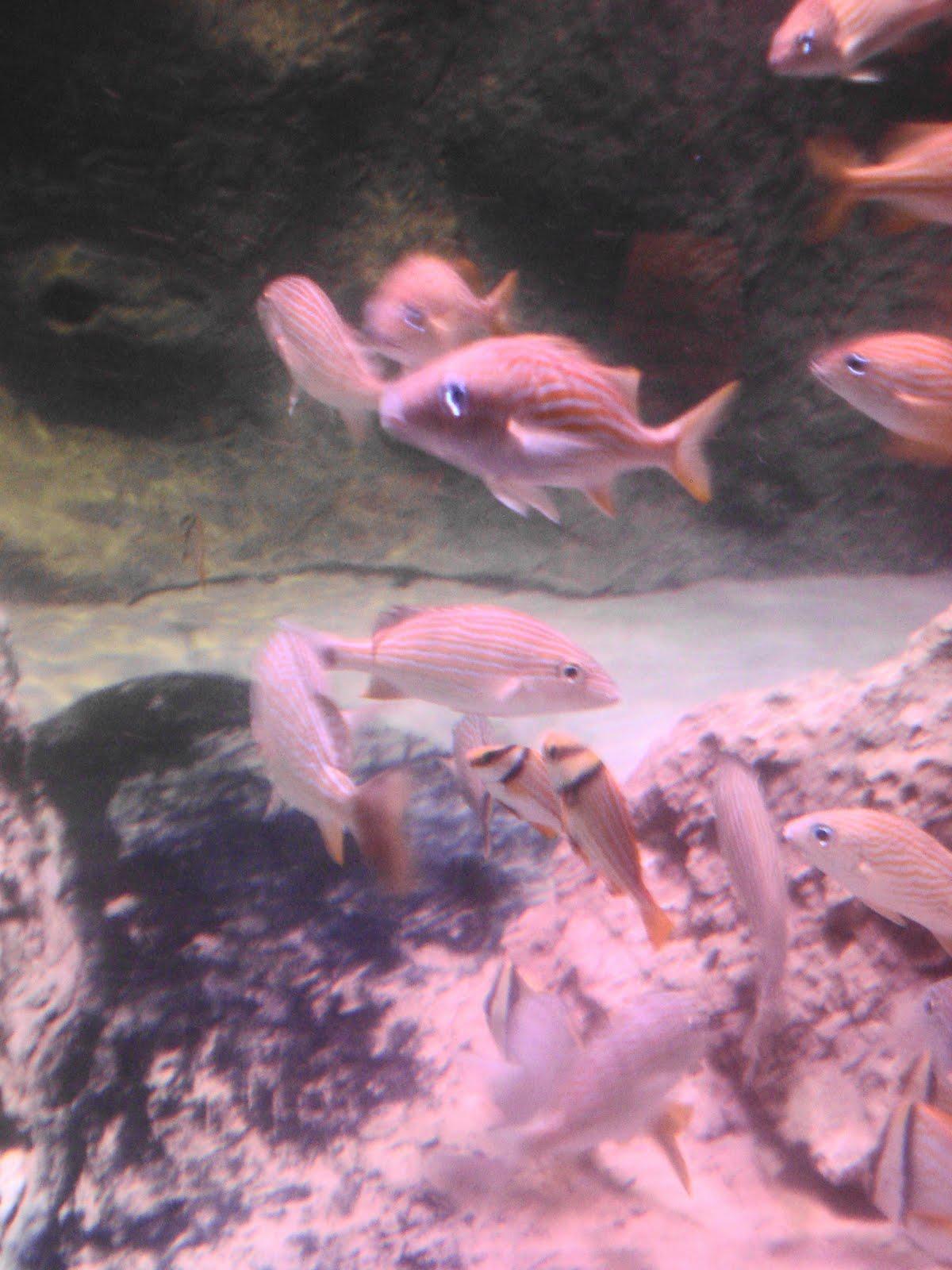 Fort Worth Mama Sea Life Aquarium In Grapevine Texas