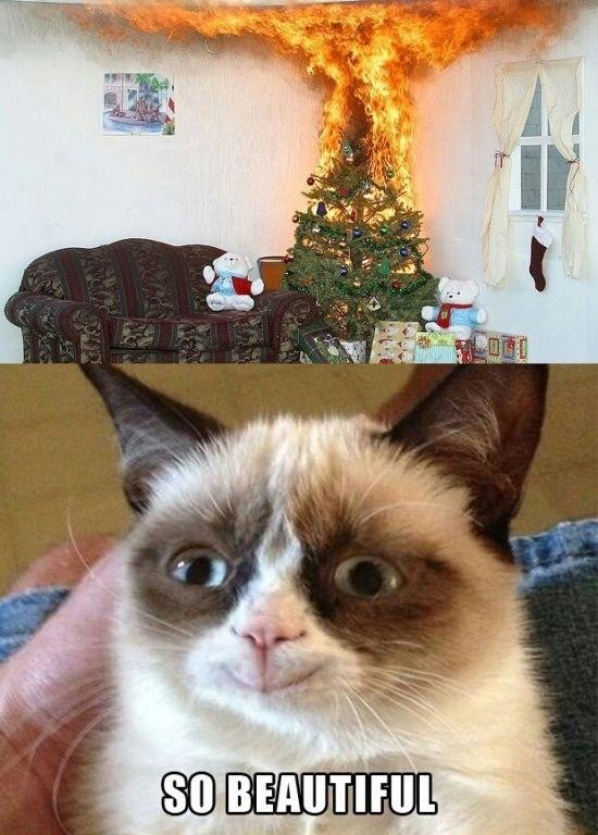 Grumpy Cat Meme Funny Collection World