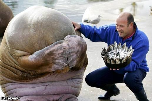 21 Foto Yang Harus Anda Lihat Setelah 21 Mei 2011 Berlalu - Seekor anjing laut malu-malu