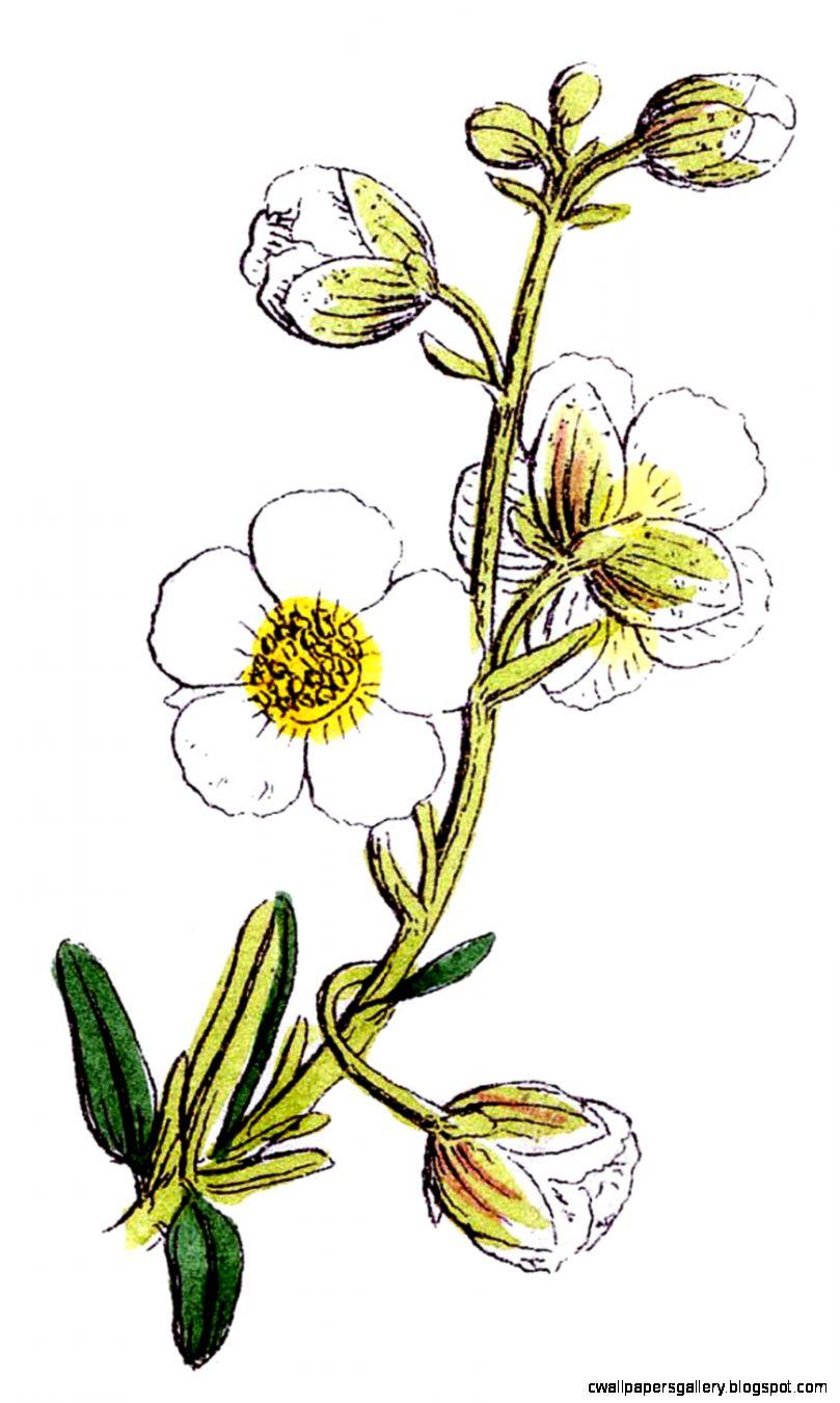 Wild Flower Clip Art