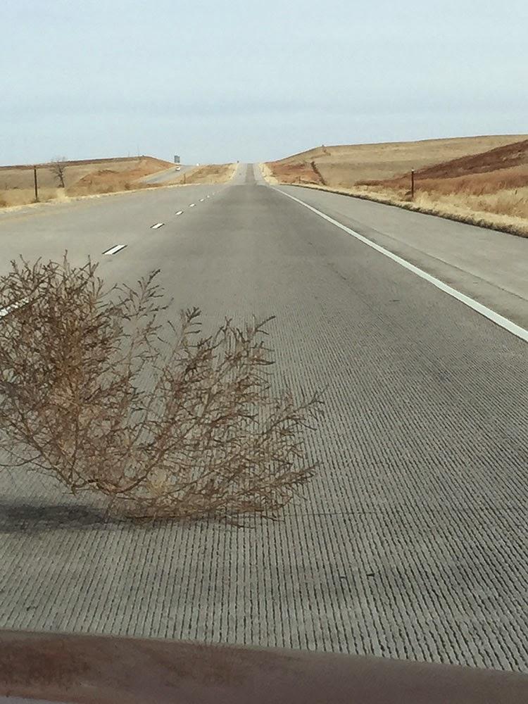 Photo of Tumbleweed crossing the road