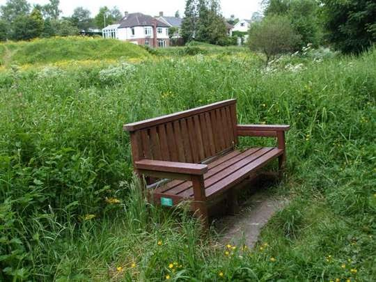 Wooden bench in vegetation