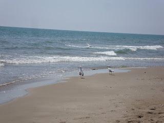 Punta de La Banya Beach sea and seagulls - Sant Carles de La rápita