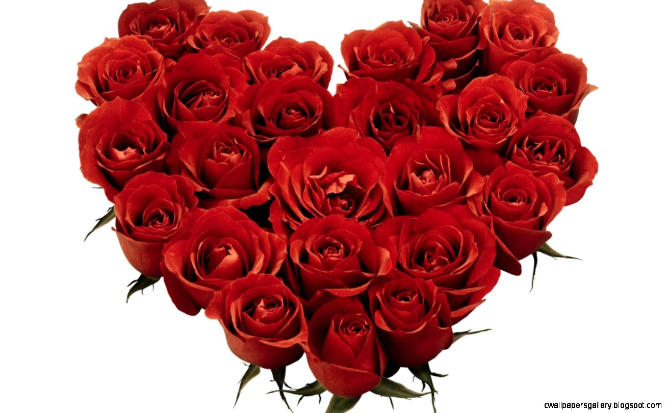 red roses pics