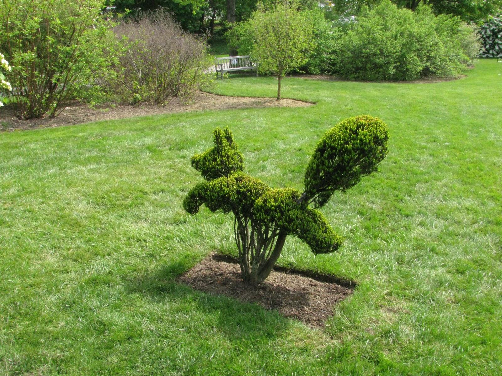 Explorando en el jard n esculturas verdes for Formas ornamentales