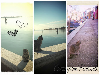 cats of burano