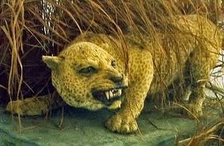 10 Especies Animales Recientemente Extintas