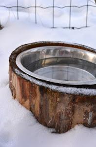 AJANKOHTAISTA NYT: koiran vesikippo sulana ilman sähköä