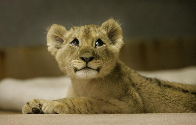 Cute wild baby animals - photo#23