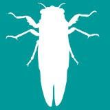 Cicada Silver Logo