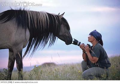semental mustang kiger llamado Sundowner en una sesión fotográfica