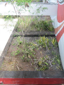 WEEDS ON A ROOF