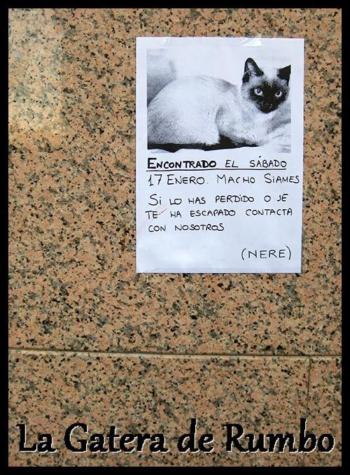 Gato perdido en Elche. Enero de 2014