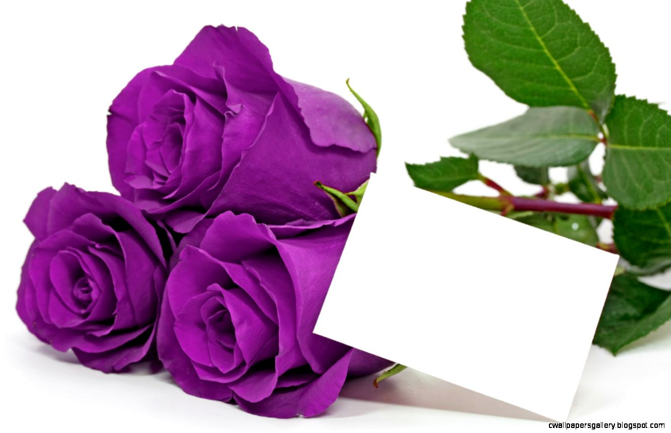 Purple Rose Quotes QuotesGram