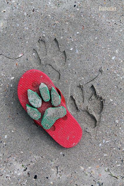 vuestras ideas: huellas de tigre en la arena-216-baballa