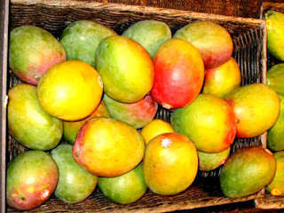 coloured mango