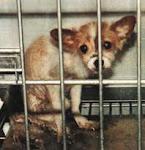 犬 動物実験