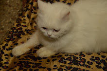 Queen cat matahari.(Monday 6-2-2012).