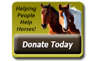 Help The Horses of The GOLDEN CARROT
