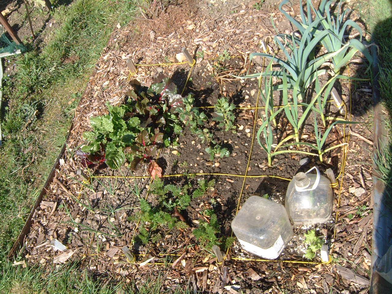 Peter\'s Square Foot Garden