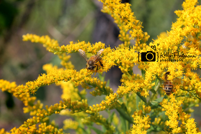 Inspirational Quote, Flowers, Bee, Kelly Portmann Photography, Nature Photography