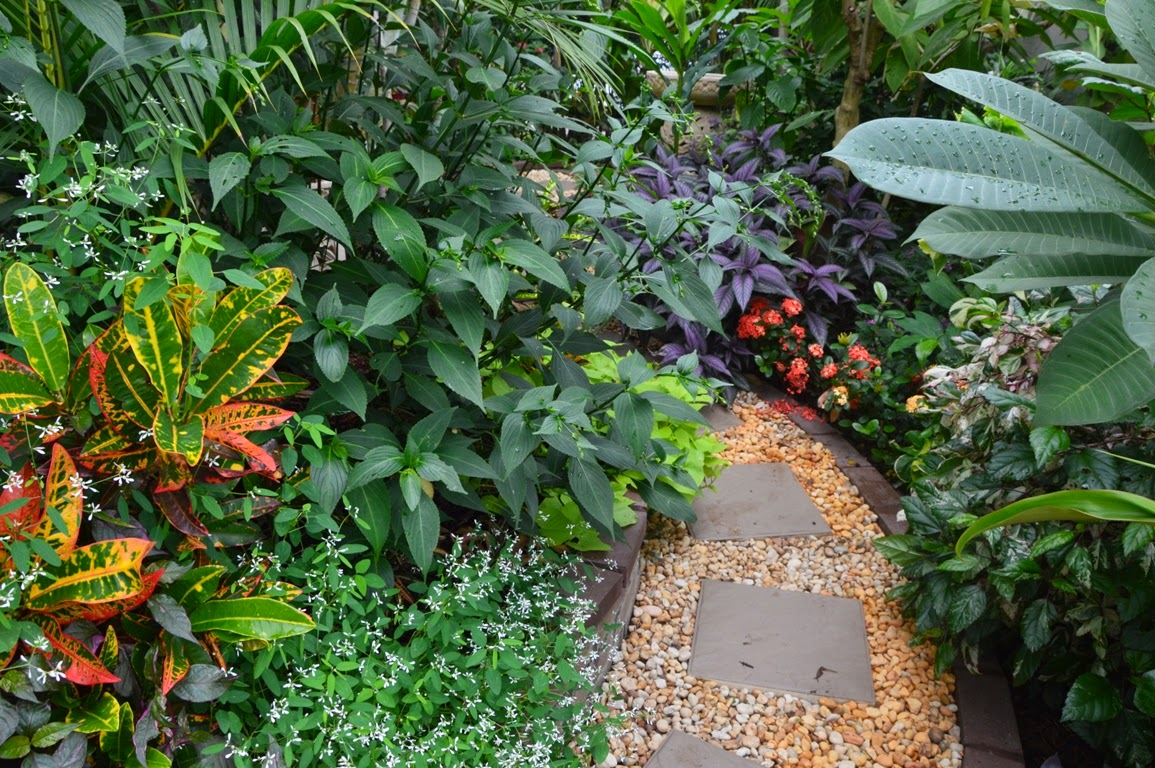 Tropical breeze is a sydney tropical garden filled with a for Unusual trees for small gardens