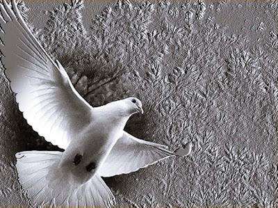 White dove messenger of dead
