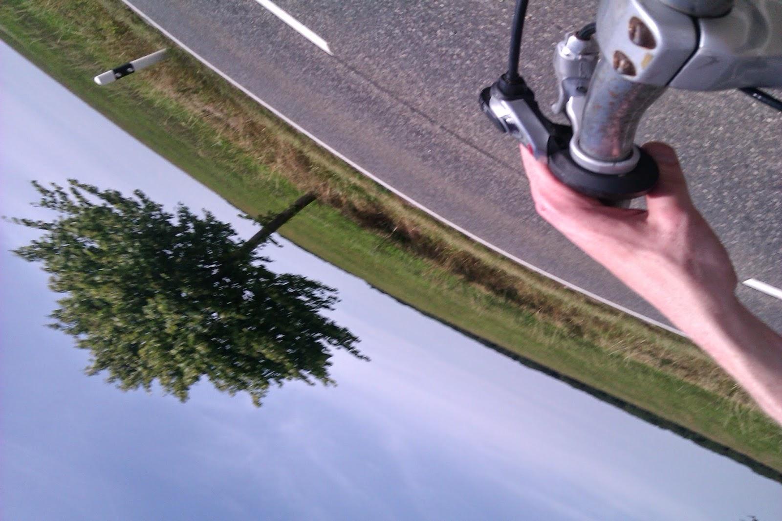 Tree bike